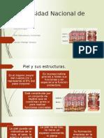 Piel y Sus Estructuras