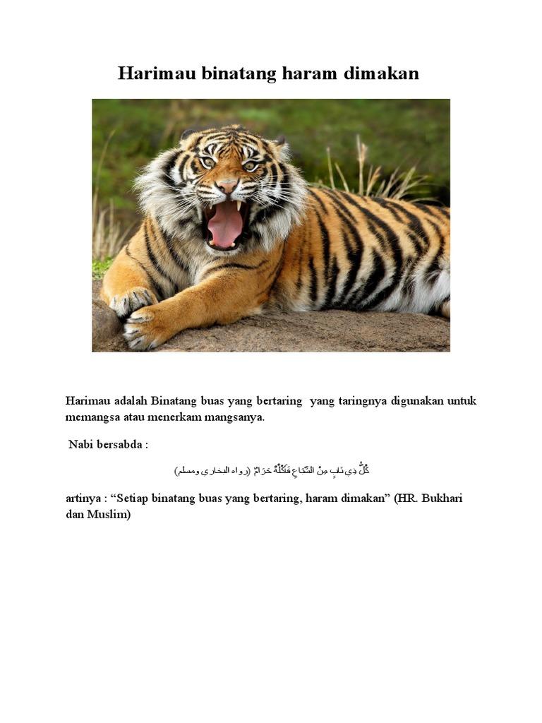 560 Koleksi Gambar Binatang Haram Dimakan HD Terbaik