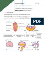 Embriologia Moore- CAPITULO OCHO