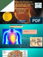 Anatomia Dell Coarazoonnnnnnn