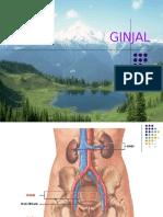 Anatomi  Ginjal.ppt
