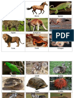 Animals From a - Z