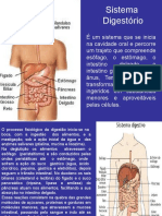 Doenças Do Sistema Digestivo