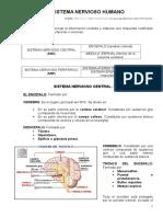 11082929-Resumen-Del-Sistema-Nervioso.doc
