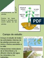 1ra Clase FISIOLOGIA VEGETAL Diapositivas