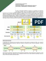 Genética - Duplicação, Transcrição e Tradução - Unamaa