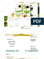 CLASE 07 - TEJIDOS VEGETALES - copia.docx