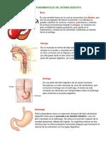 Órganos Fundamentales Del Sistema Digestivo