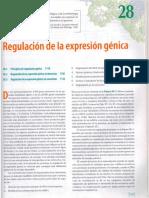Capitulo 28 Lehninger Regulacion Genetica