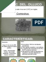Virus c Del Olluco Lcp