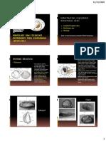 Morfologi Dan Fisiologi Reproduksi Pada Kekerangan (Bivalvia)