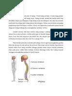 Anatomi HNP