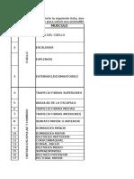 Lista Musculos Repartidos Ficha 1262285