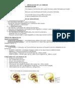 Guia Anatomia 2 Corte (Solo Musculos)
