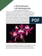 Orquideas Del Santuario Histórico de Machupicchu