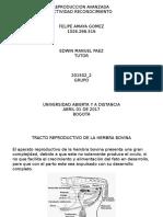Trabajo Paso 1 Felipe Amaya Reproduccion Avanzada