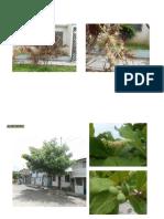 Especies del distrito de Satipo