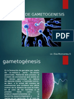 proceso-de-gametogenesis.pptx