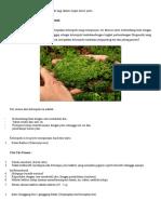 Klasifikasi Tumbuhan Tingkat Rendah Di Bagi Dalam Empat Divisi Yaitu