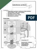 Metabolisme protein.doc