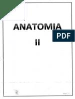 Anatomia 2