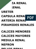CORTEZA RENAL.docx