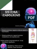 2.-ENDOCRINO