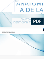 Anatomia Dental Monografia Nerida