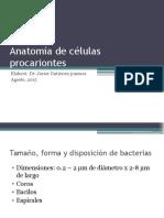 Anatomía de Células Procariontes
