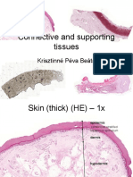 connective tissues types