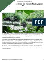 Fitorremediación_ Plantas Que Limpian El Suelo, Agua o Aire