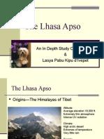 Lhasa Apso a Study ny Lhasa-Apso.org