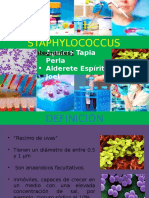 Diapositiva Staphylococcus