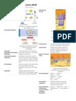 Print › Biology Lecture 25(12) _ Quizlet