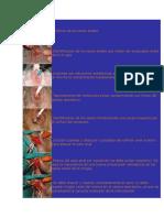 Cirugioa Bilateral de Sacos Anales