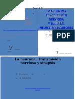 Pm Ppt - La Neurona-sinapsis