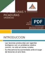mordedurasypicaduras-110913002108-phpapp02