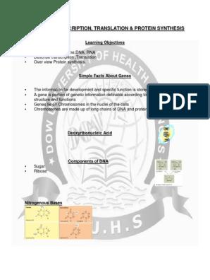 DNA, RNA, TRANSCRIPTION, TRANSLATION & PROTEIN SYNTHESIS pdf