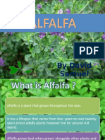 Alfalfa English 140323111407 Phpapp02