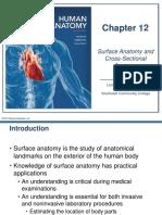 Surface & Cross Sectional Anatomy