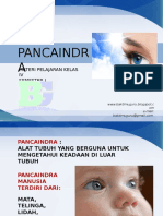 4-pancaindra.ppsx