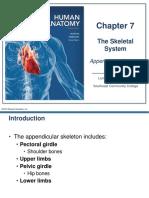 The Skeletal System - Appendicular Division