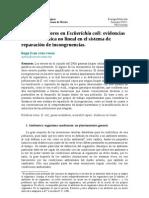 Genes Mutadores en Escherichia coli