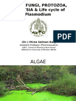 Algae, Fungi and Protozoa