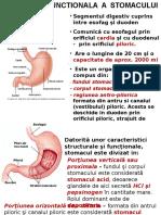 c9 Curs Digestie Stomac 2011