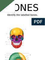 Parts of the Bones