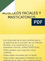 musculos faciales