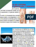 242438886-FARMACOLOGIA-DEL-SISTEMA-REPRODUCTOR-MASCULINO-Y-FEMENINO-pptx.pptx