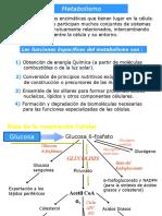 Respiracion Celular (1)