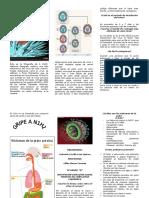 Qué es la Gripe Porcina.doc